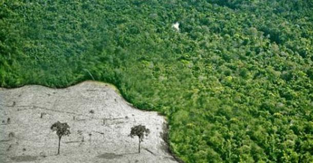 Senado aprova novo Código Florestal