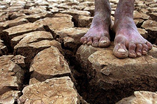Dilma diz que seca no Nordeste é a pior dos últimos 50 anos