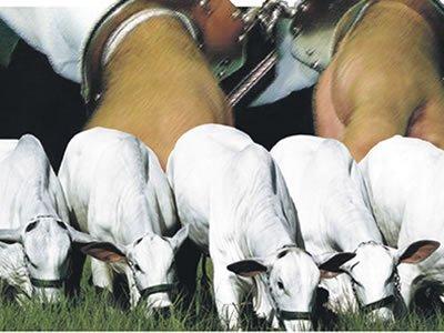 Polícia prende acusados de roubar gado no interior de Sergipe