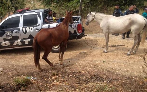 PM prende suspeitos de tráfico e flagra dupla por furto de cavalos