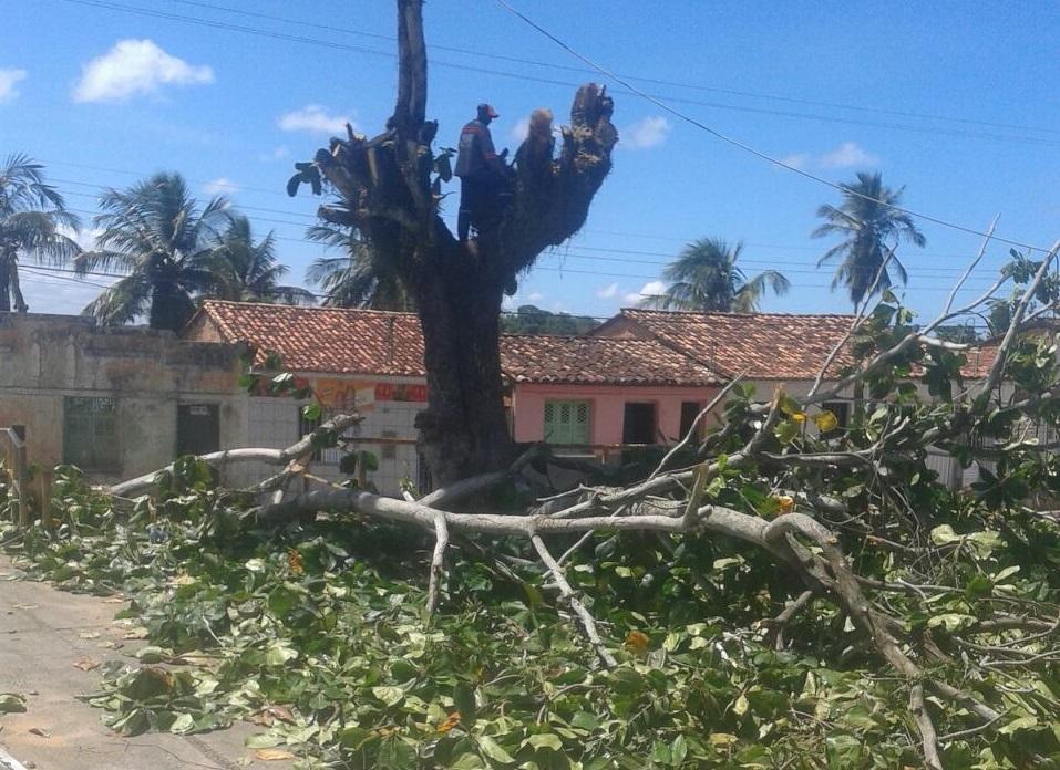 Justiça proíbe prefeitura de Santo Amaro de podar ou retirar árvore no perímetro urbano